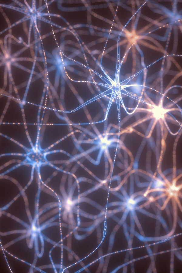 Neurobiology Connections